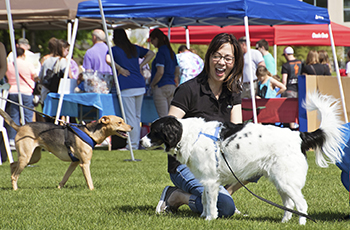 Plymouth's Bark in the Park event