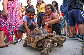 Naturalist Visit featuring a large turtle in Plymouth